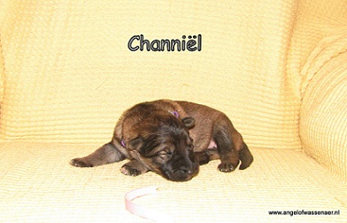 Channiël, 1 week