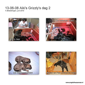 Grizzly's dag 2