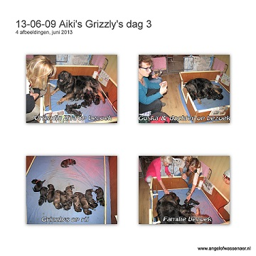 Grizzly's dag 3