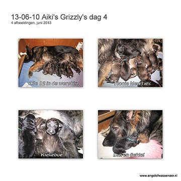 Grizzly's dag 4