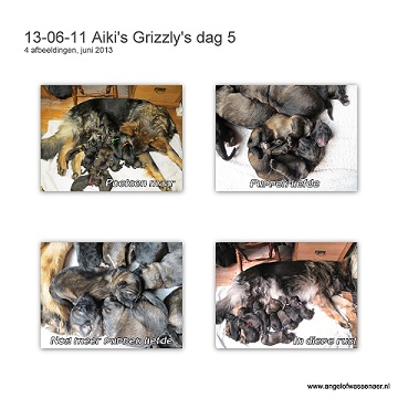 Grizzly's dag 5