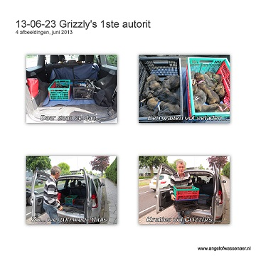 Grizzly's 1ste autorit