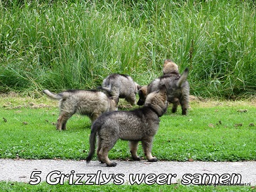 5 Grizzly's in het park