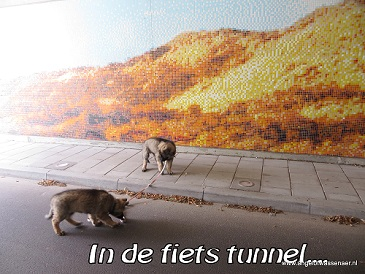 Aan de riem mee de tunnel in