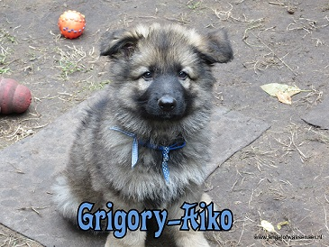Grigory-Aiko