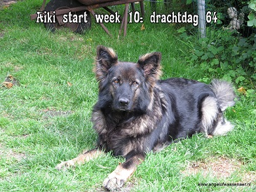 Aiki start week 10, 64 dg dracht