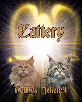 CoMys Jeheliel, Maine Coon Cattery