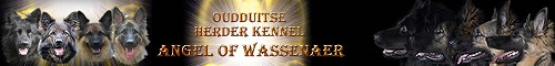 Oudduitse Herder Kennel Angel of Wassenaer