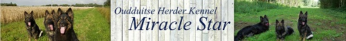 Oudduitse Herder kennel Miracle Star