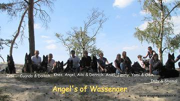Alle nakomelingen ODH Kennel Angel of Wassenaer